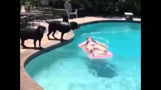 Собака прыгает на девушку в бассейне Прикол