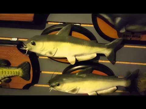 Singing Fish Collection Update