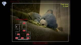 - Five Nights at Barsik s Скрытая Камера