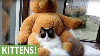 This compilation of cats & kittens will leave you wanting more!