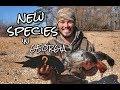 RARE Sea Duck!! Georgia Duck Hunt 2018