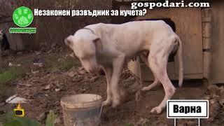 Инспектори от Варна конфискуваха измъчваните в незаконен приют кучета