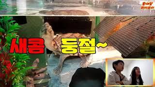 [반수생거북] 레이저백 머스크터틀, 새콤이의 식사! 레…