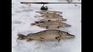 Ловля щуки джигом в январе Огнёвая рыбалка