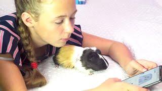Первая Встреча морская свинка Хома Бузова свинка Хомода  | Стефан и Крутые  морские свинки