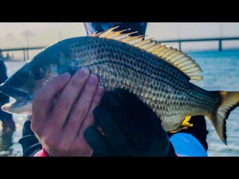 The Entrance Fishing NSW - Soft Plastics Big Breams And Loads Of Flathead