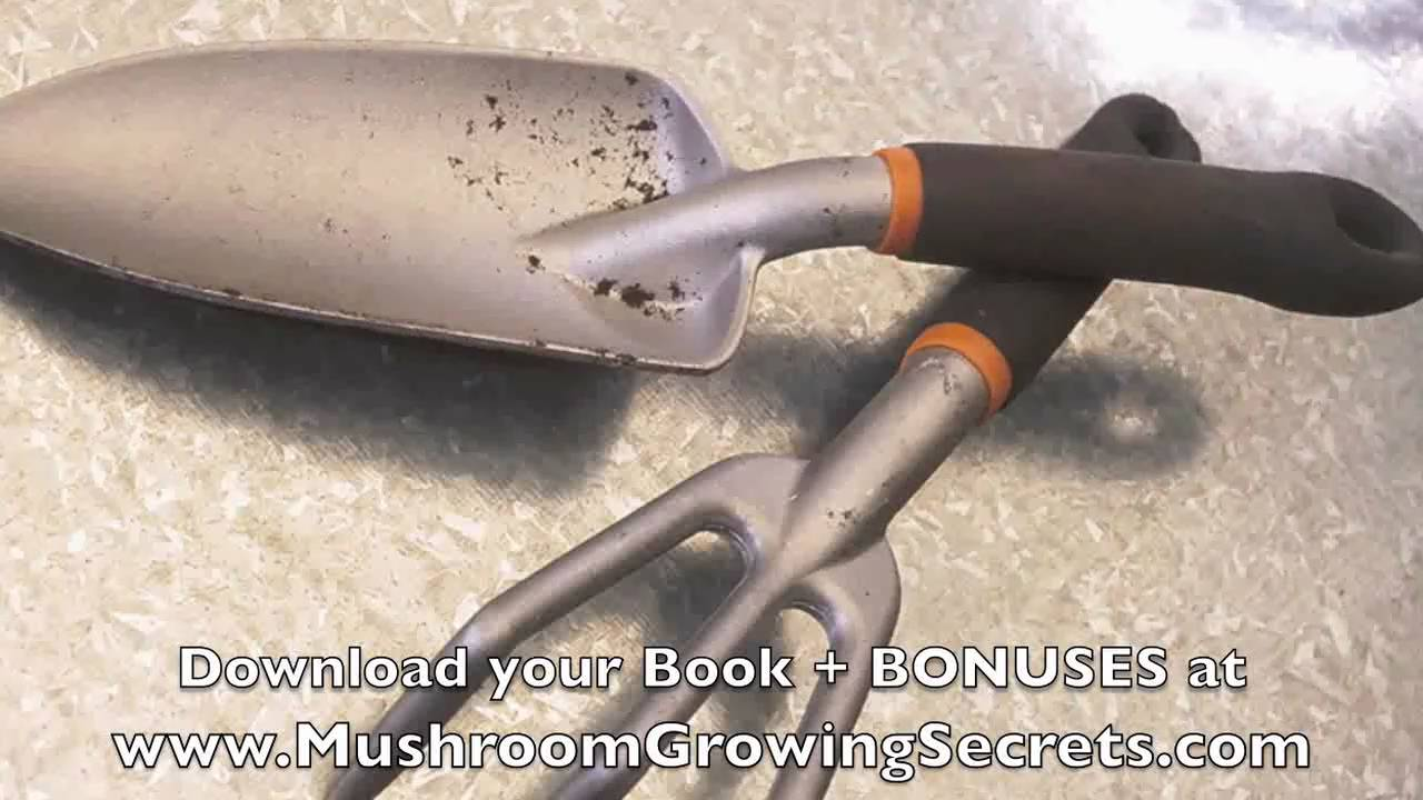 How to Grow your Own Portabella Mushrooms at Home