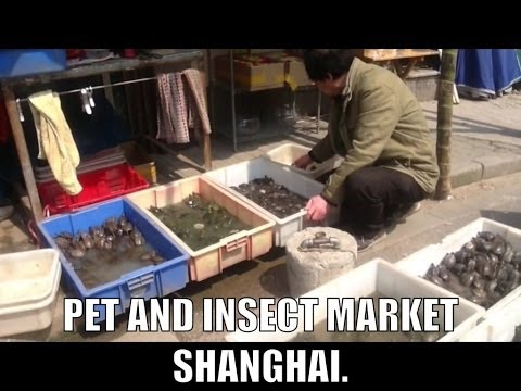 Pet and insect market in Shanghai - I went to the pet and insect market in Shanghai.