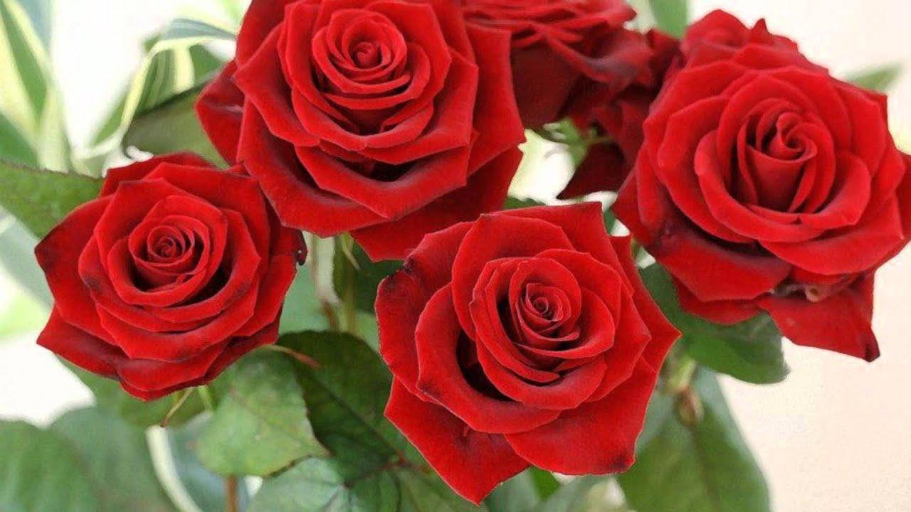 Rote Rosen Darsteller Wechsel