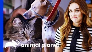Pet Experts Think It's Unsafe To Integrate These Pets | Cat vs. Dog