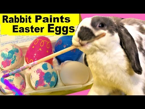 REAL BUNNY decorates his own Easter eggs - Happy Easter from Bini the Bunny