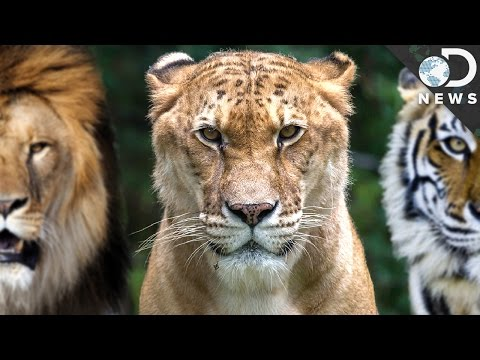 How Evolution Creates Hybrid Animals
