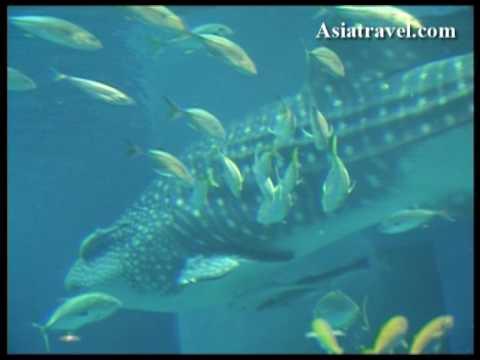 Osaka Aquarium Kaiyukan 海遊館 by Asiatravel.com