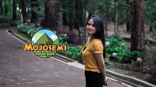 Download Mojosemi Forest Park | Sony A6000 & Meike 35mm f1.7 Cinematic Video