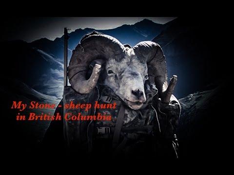 My Stone Sheep-hunt British Columbia