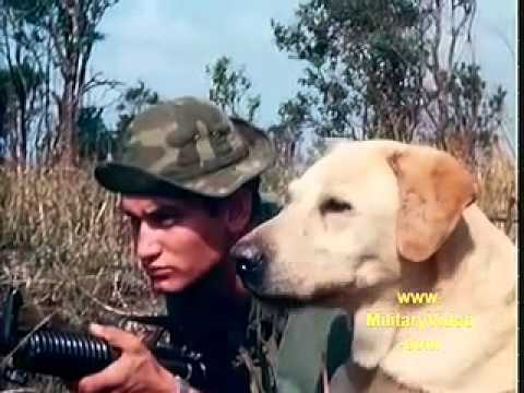 "Trailers For Less >> ""A Breed Apart"" Combat Trackers And Their Dogs In The ..."