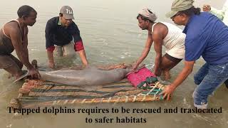 Freshwater Dolphin_ Dolphin Conservation in India