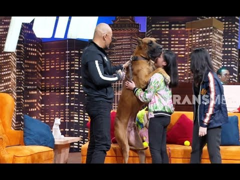 Kakak Beradik Pecinta Anjing Great Dane | HITAM PUTIH (25/03/19) Part 4