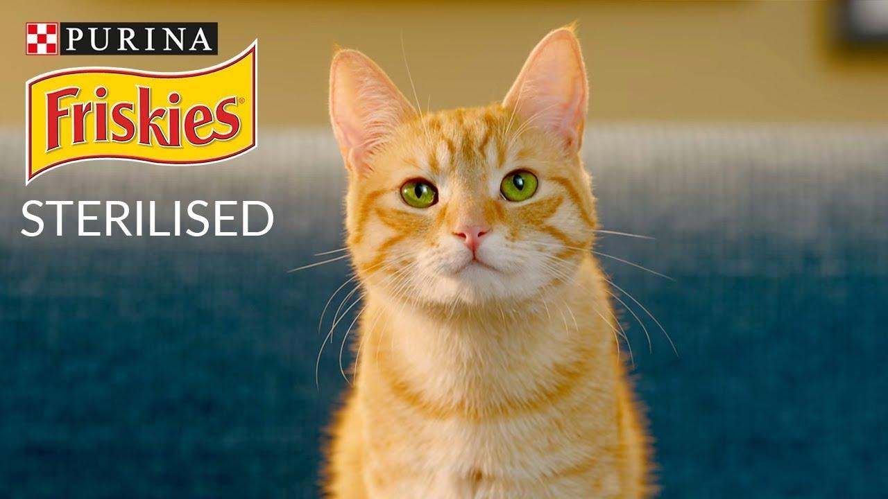 3953bcf207af FRISKIES® Sterilized - Η πλήρης τροφή για στειρωμένες γάτες