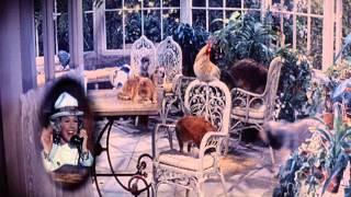 Bitte nicht stören (Do not disturb) Doris Day, Rod Taylor (1965)