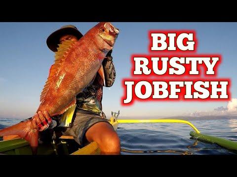 Rusty Snapper/Jobfish Hauled Up By Deep Liner Spy-V