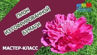 Ростовой пион из гофрированной бумаги: мастер класс как сделать своими руками