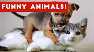 Funniest Animal Moments Caught On Tape Compilation January 2017   Funny Pet Videos