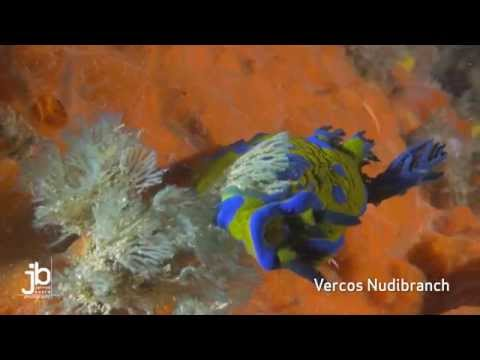 Vercos Nudibranch - A minute to spare.