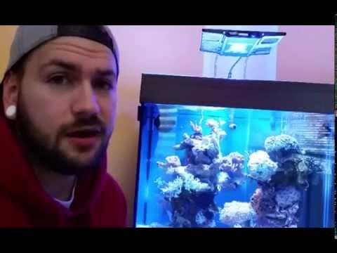 220 liter meerwasser aquarium w rfel 60x60x60 mit unter. Black Bedroom Furniture Sets. Home Design Ideas