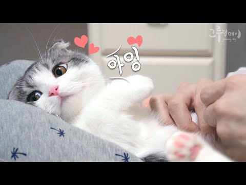 Soft cat jelly care!
