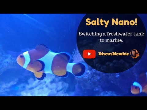 Switching a freshwater tank to nano saltwater