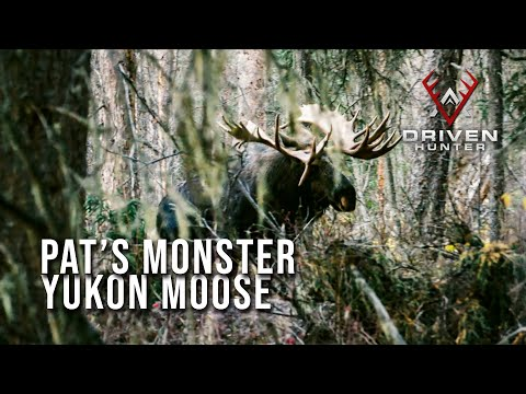 HE'S HUGE! - World Class Yukon Moose With A Bow | Throwback Hunts