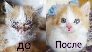 Заболели котята у которых умерла мама😢