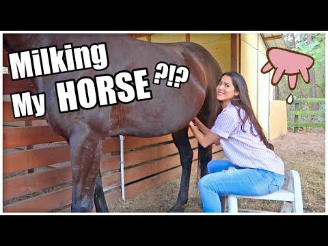 Milking My HORSE?!? | My Pregnant Horse Pt.8
