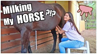 Milking My HORSE?!? | My Pregnant Horse Pt.8
