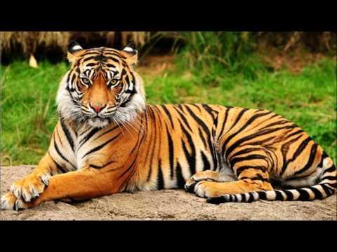 Les animaux de la jungle youtube - Decoration animaux de la jungle ...