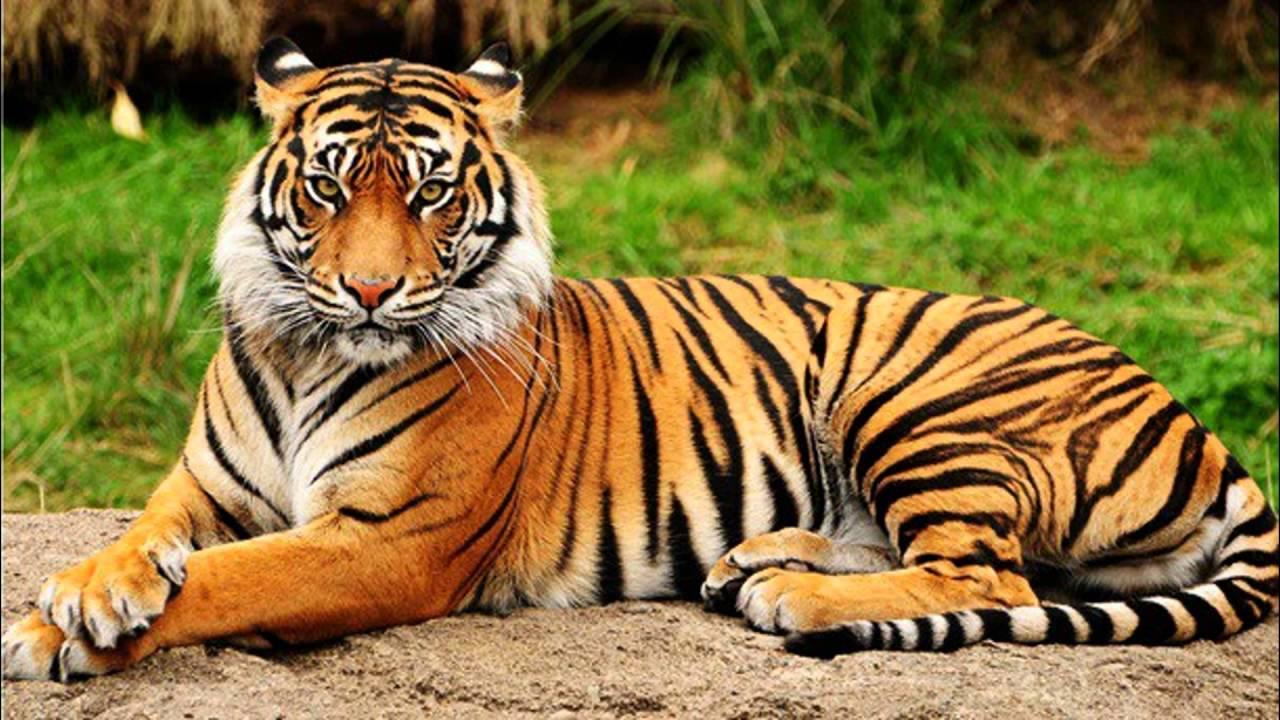 Image Animaux De La Jungle les animaux de la jungle - youtube