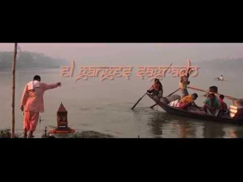 Delfines en el sagrado Ganges: un llamado a su protección