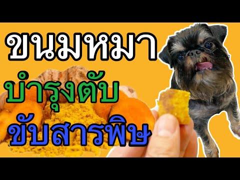 ขนมหมาสูตรบำรุงตับขับสารพิษจากขมิ้นชัน ทำได้เองที่บ้าน ครูเมี่ยว(โซ)เชี่ยวหมา