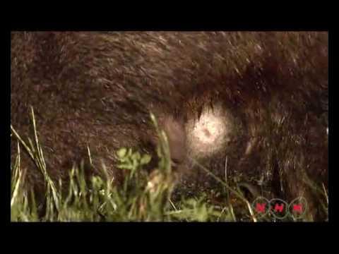 Tasmanian Wilderness (UNESCO/NHK)