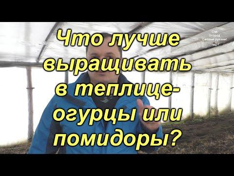 Что проще и выгоднее выращивать в теплице? Огурцы или помидоры?