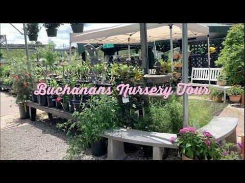 Plant Shop With Me! | Buchanan's Nursery Tour