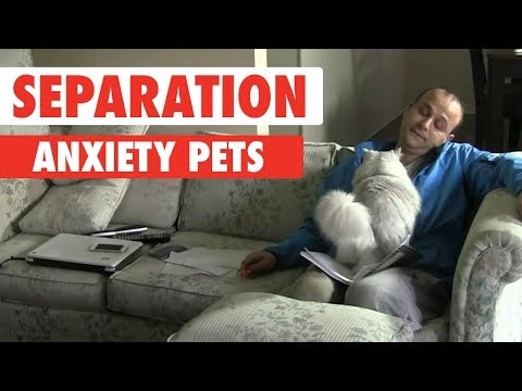 Separation Anxiety Pets