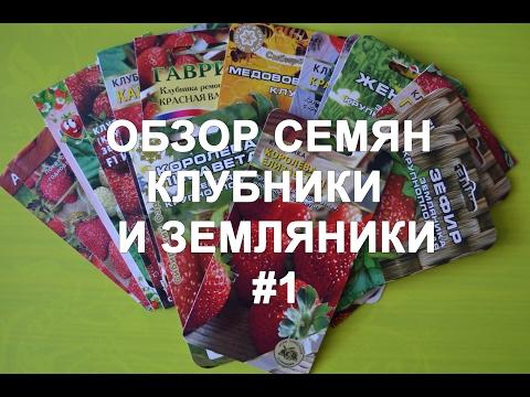 Обзор сортов семян клубники и земляники #1