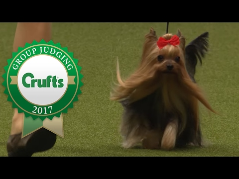 Toy Group Winner's Interview | Crufts 2017