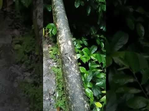 Strange Spider Vietnam September 14th 2017
