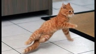 ПОДБОРКА КОШКИ ТАНЦУЮТ И ЧИХАЮТ( dancing cat)