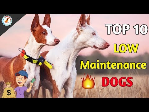 TOP 10 LOW MAINTENANCE DOG BREEDS / Low Maintenance Dog / At Mix