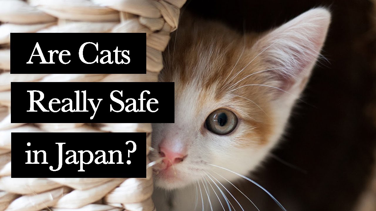 Why Many Cats are Killed in Japan