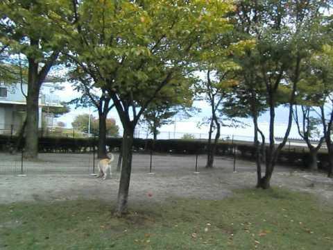 諏訪湖SA上りドッグラン紹介